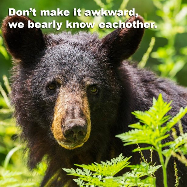 bearly_know_eachother