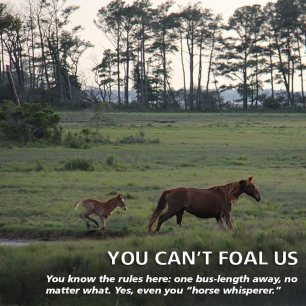 cant-foal-us
