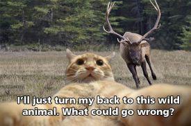 selfie-cat-elk-funny
