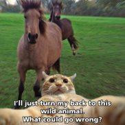 selfie-cat-horse-funny