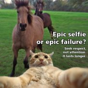 selfie-cat-horse-respect