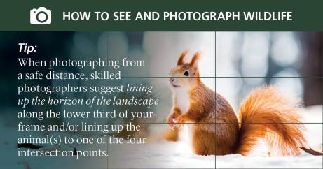 social_media_photo_tips8